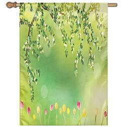 HUANGLING Tulips With Colored Petals Under Tree Branch In Th